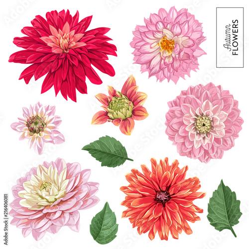 Fotografía Red Asters Flowers Set