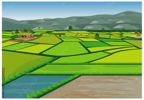 Wallpaper Mural large paddy field vector design