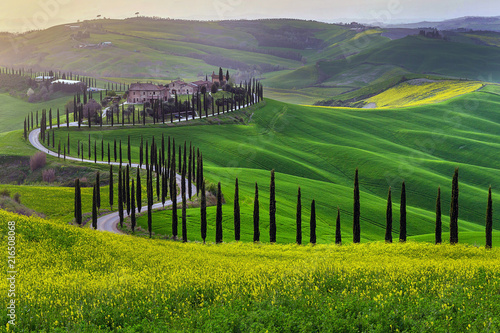 Stampa su Tela Green hills of Tuscany