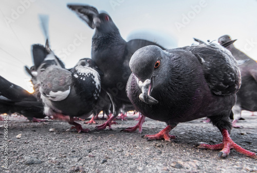 Pigeons on the street are photographed from the ground level