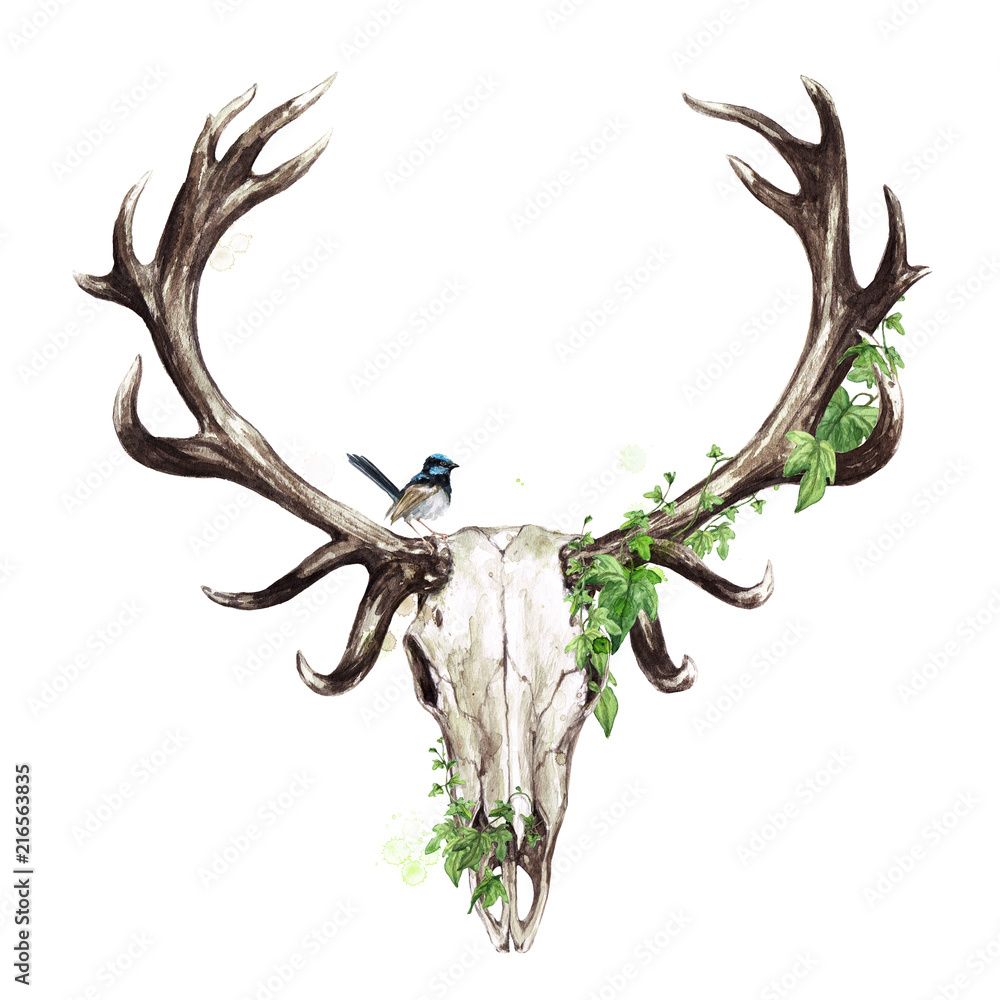Czaszka Zwierząt Akwarela Ilustracja <span>plik: #216563835   autor: nataliahubbert</span>