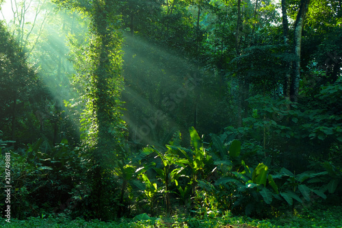 Canvas Print rainforest and sunbeam at morning