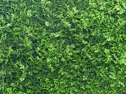 Canvas Print Ornamental shrubs ,Wall shrubs