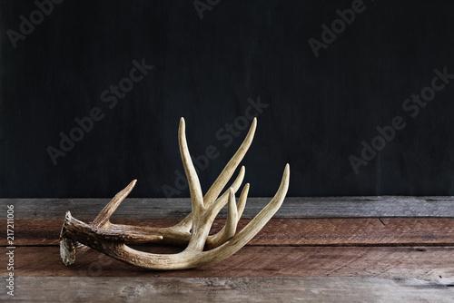 Fotografia Pair of Deer Antlers