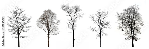 Wallpaper Mural Collection of trees without leaves isolated on white background