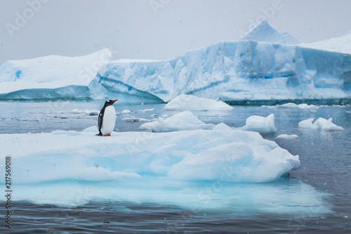 Canvas Print penguin in Antarctica,  wildlife nature, beautiful landscape with icebergs