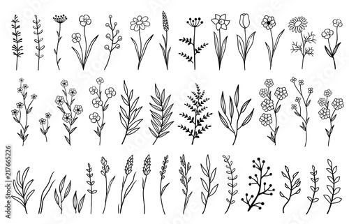Canvas Print hand drawn isolated flowers and herbs