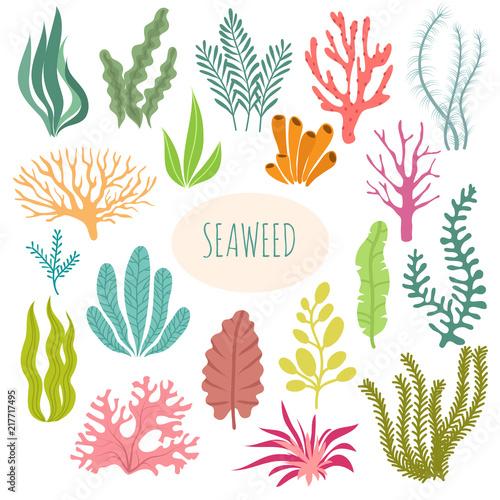 Obraz na plátně Seaweeds
