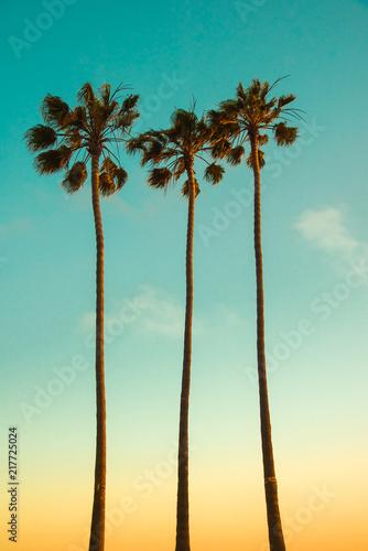 Summer tropical island paradise vintage design background. Three very high Mexican fan palm trees (Washingtonia Filifera) on sunsetting light backdrop. Californian beach landscape wallpaper.