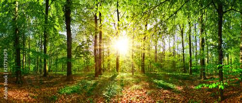 Obraz premium Piękny las wiosną z jasnym słońcem świecącym przez drzewa