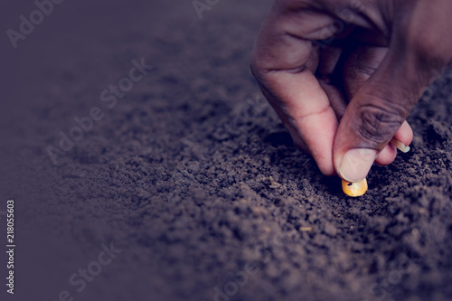 Canvas Print indian farmer sowing corn seeds
