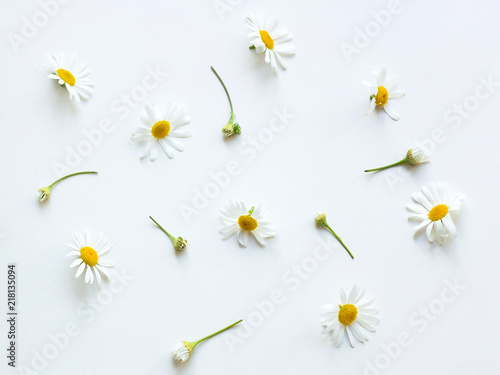 Chamomile flowers Top view Many flowers and buds of chamomile are lying on a white table Photo template in pastel colors
