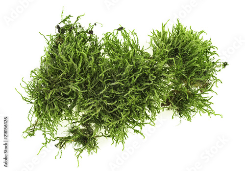 Canvas Print Green moss on white background, top view.