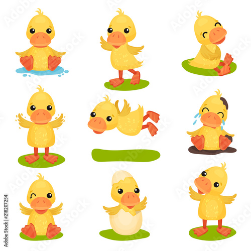 Stampa su Tela Cute little yellow duckling character set, chick duck in different poses and sit