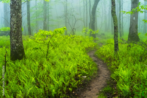 Fotografia path in the forest in the fog on the Appalachian Trail