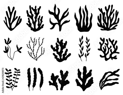 Fotografie, Obraz seaweed silhouette isolated. Marine plants on white background.