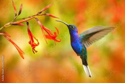 Obraz na plátně Wildlife in Costa Rica
