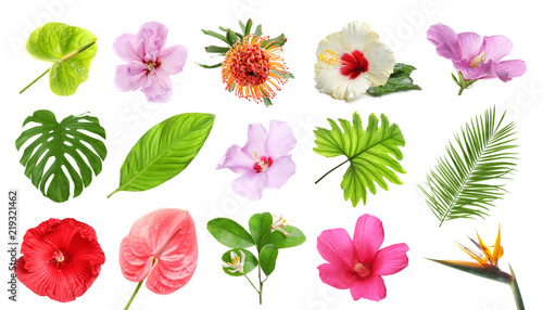 Fototapeta premium Zestaw z pięknych tropikalnych kwiatów i zielonych liści na białym tle
