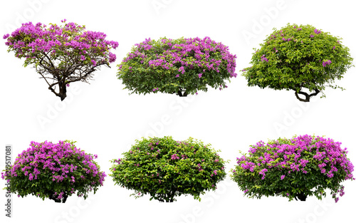 Fotografija Pink flowers or Fueng Fah flower isolate background with Clipping Path