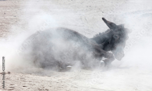 Photo Adult donkey rolling in the sand