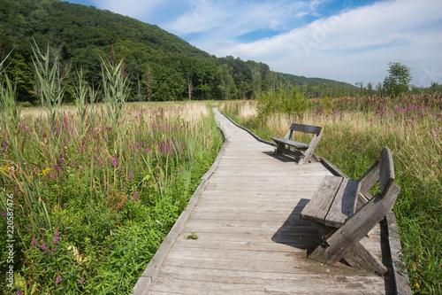 Fotografia Appalachian Trail