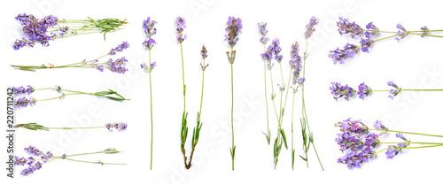 Fototapeta premium Ustaw z aromatyczną świeżą lawendą na białym tle