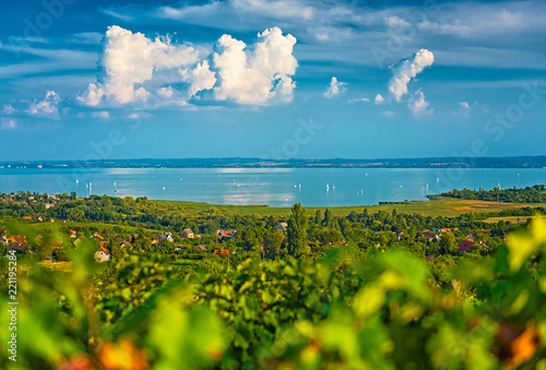 Fotografie, Obraz Nice vineyard in Hungary at lake Balaton