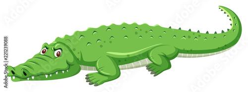 Tela A green crocodile on white background