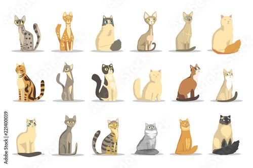 Obraz na płótnie Cat different breeds set, cute pet animal vector Illustrations