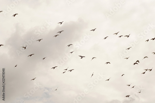 group of pigeons in the sky