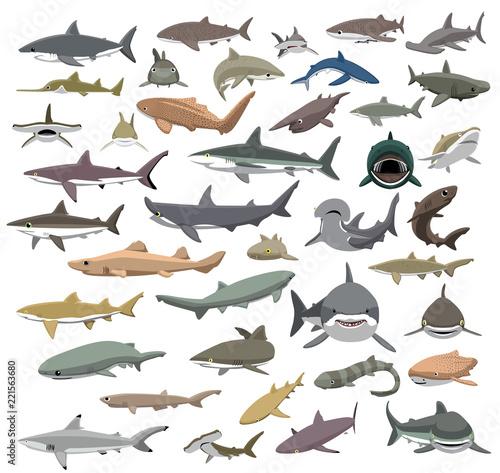 Fototapeta premium Wiele gatunków rekinów świata kreskówka wektor
