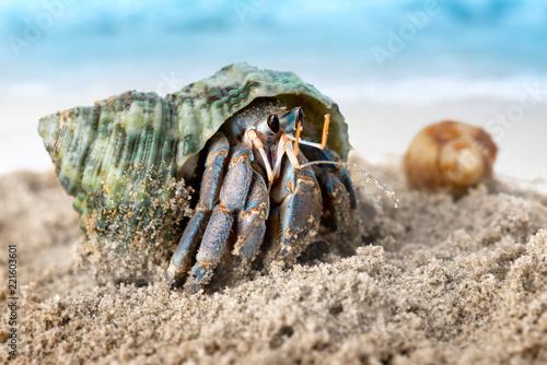 Colorful hermit crab on the beach. Fototapeta