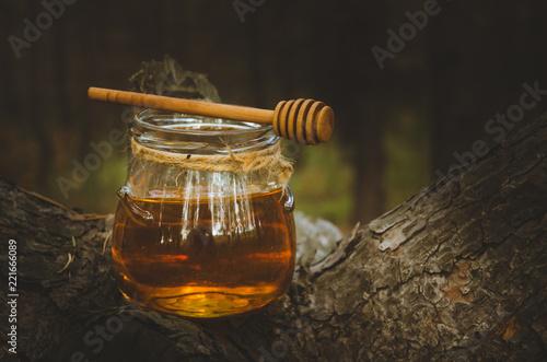 Jar of fresh honey and honey spoon on pine tree in woods. Fototapeta