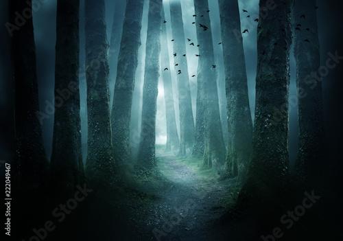 Fotografie, Tablou Pathway Through A Dark Forest