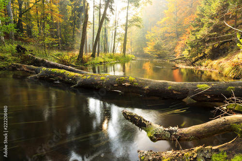 Autumnal river./ Awesome autumn river Brda and forest with fallen stumps in north Poland