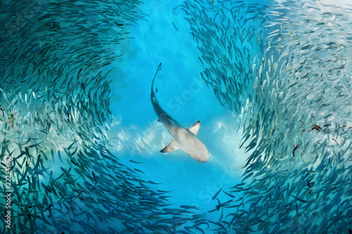 Photo Shark and small fishes in ocean