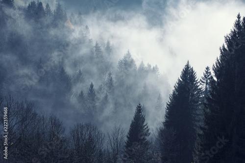 Naklejka na szafę Magiczna mgła w prawdziwym lesie