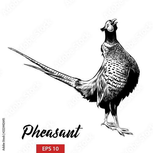 Obraz na plátně Vector engraved style illustration for posters, decoration and print