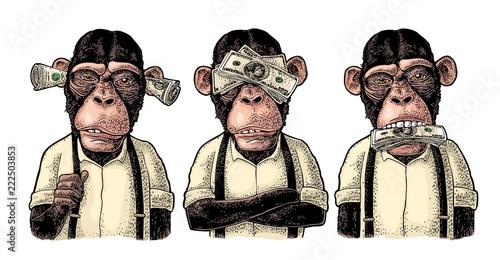 Fototapeta premium Trzy mądre małpy. Nie widzieć, nie słyszeć, nie mówić. Grawerowanie vintage