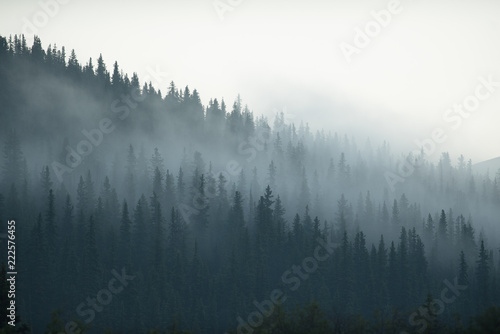 Photo Mystic Canadian forest
