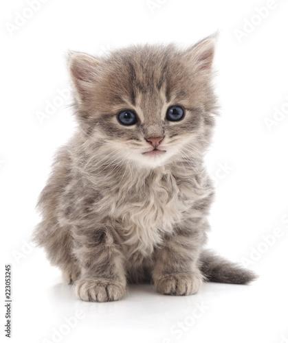 Photo One little kitten.