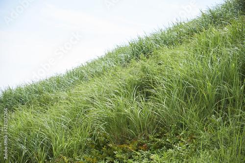 急斜面の芝生