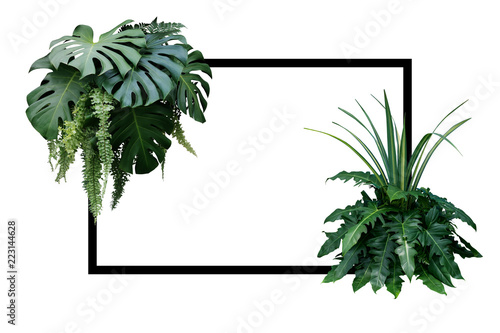 Tropical leaves nature border, foliage plant bush (Monstera, fern, philodendron and dracaena)  floral arrangment on white background with black frame.