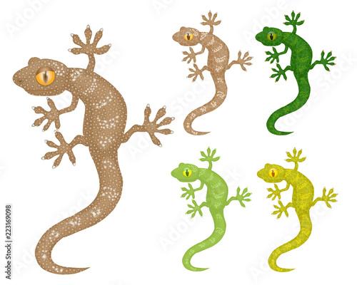 Fototapeta premium Gecko, zestaw tego samego wizerunku jaszczurki w różnych kolorach. Ilustracja wektorowa, pojedyncze obiekty.