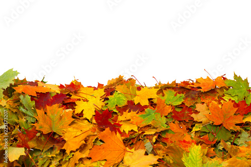 Pile of autumn colored leaves isolated on white background.A heap of maple dry leaf .