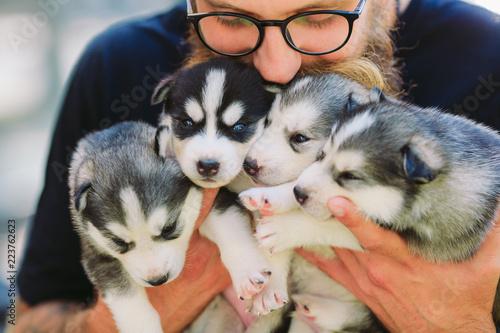 Puppies Siberian Husky Fototapeta