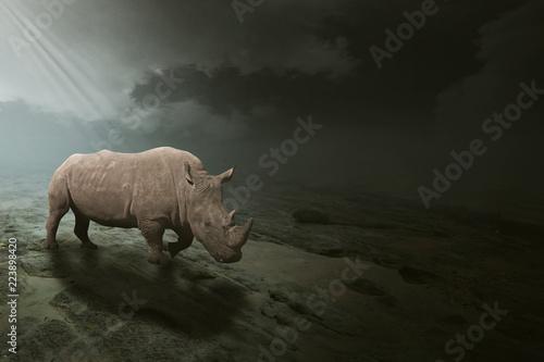 Fototapeta premium Biały nosorożec pasący się na otwartym polu