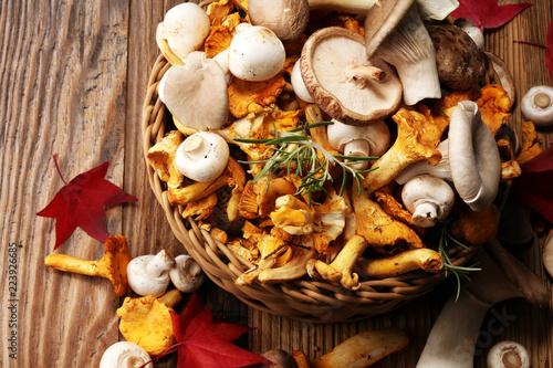 variety of raw mushrooms on wooden table Fototapeta