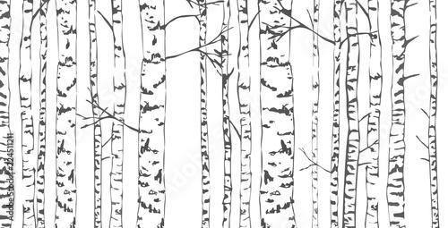 Canvas Print Birch trees sketch