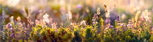 Photo wild flowers and grass closeup, horizontal panorama photo